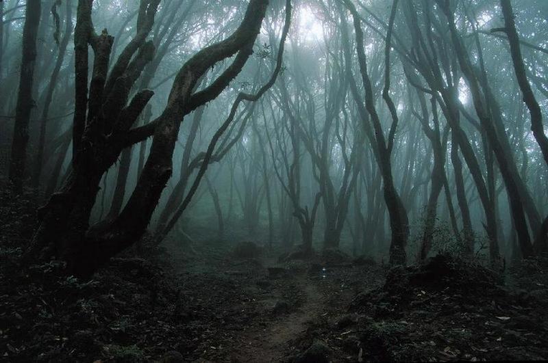 [Obrázek: Dark_Forest.jpg]