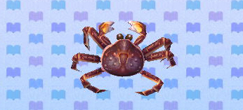 [GUIDE] Les créatures marines. Crabe_royal