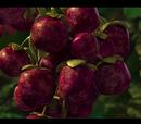 Dino Fruit