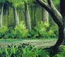 Morx Forest