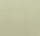 Team Shiba