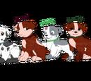 Building a future: RubbleXKyla pups