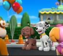 Pups Great Race/Trivia