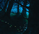Synkkä Metsä
