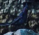 Kosogłos (ptak)