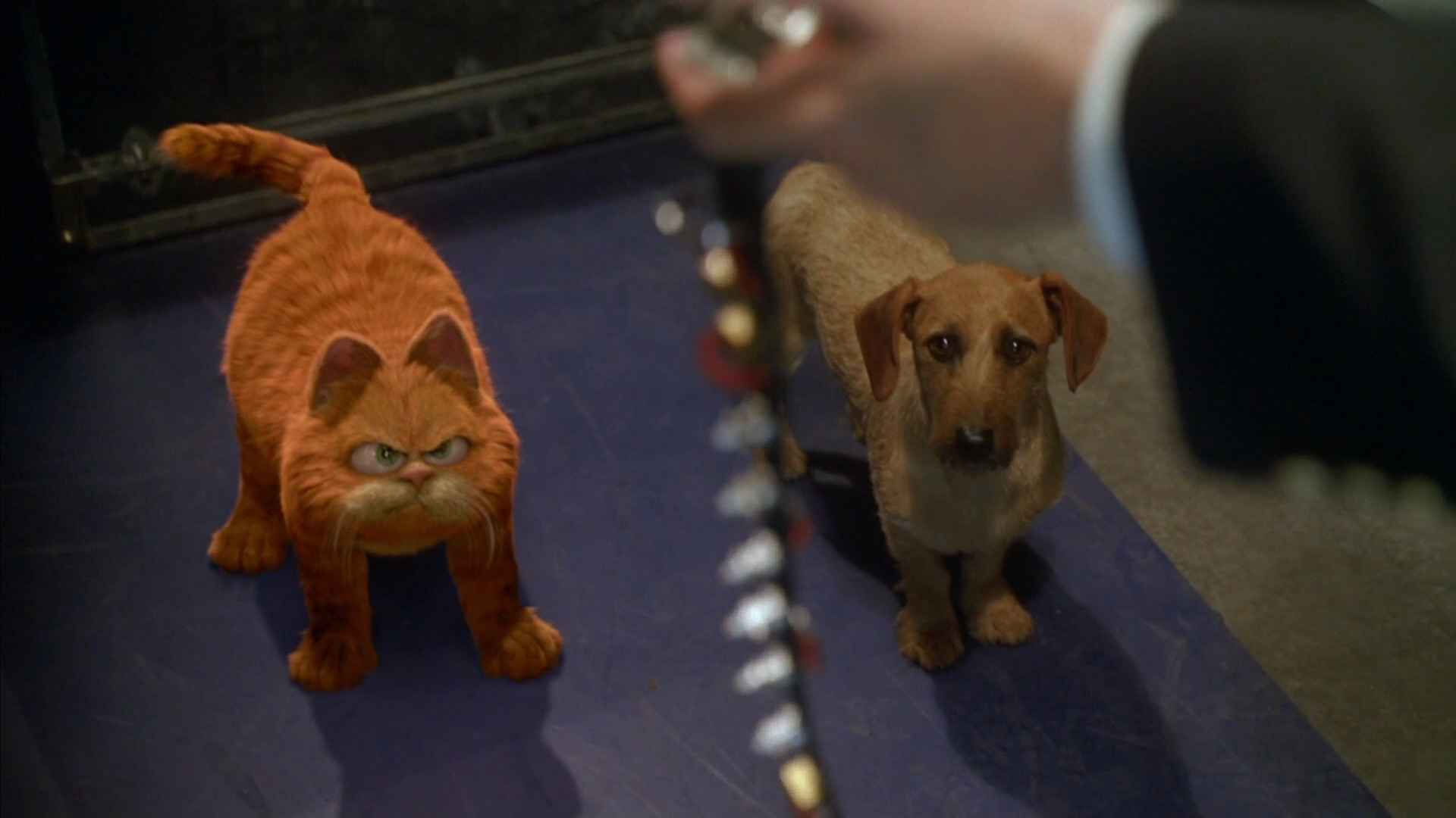 Garfield And Friends Cats Dogs