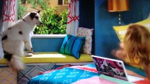 Dog On A Catwalk - Clip!