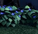 Blauer Oleander