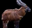 Bongo (Royboy407)