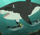 Stuck on Sharks