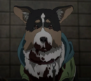 Parasite Dog