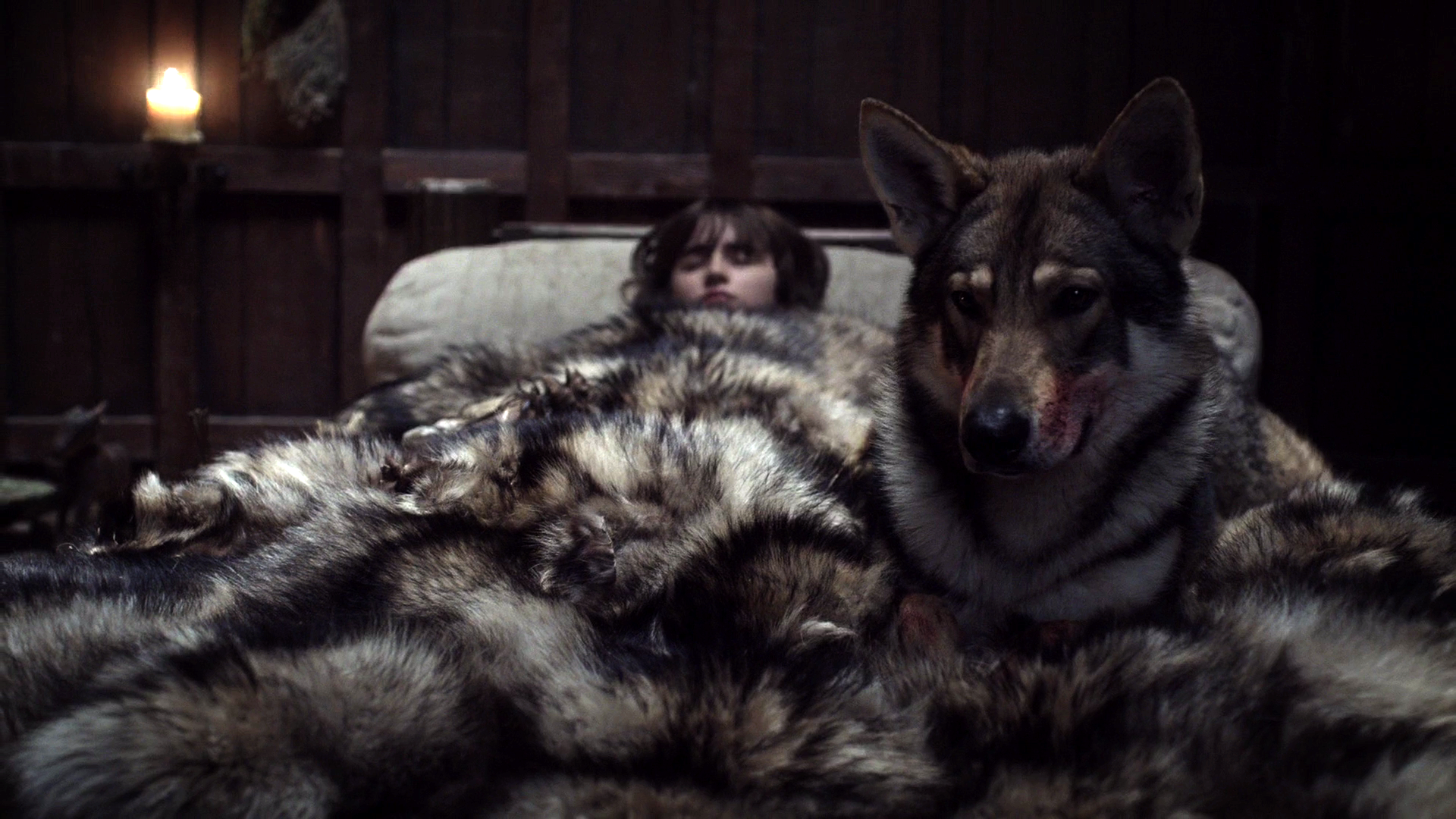 Game of thrones lady direwolf