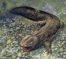 Pitt Lake Lizard