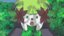 Shaymin Seed Flare.png