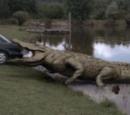 Maine River Crocodile