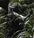 Velociraptor antirrhopus 2.jpg
