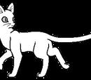 Bilder von Bergkatzen
