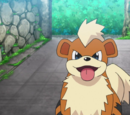 Officer Jenny's Growlithe
