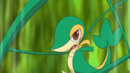 Ash Snivy Vine Whip.png