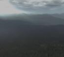 Forêt infinie