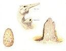 Corytholurus nesting behavior by hyrotrioskjan.jpg