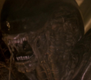 Персонажи Alien 3