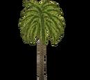 Canary Island Date Palm (Zelda-Maniack)