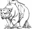 Gra Wyobrazni bear.png