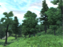 Great Forest.png