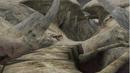 Result Screen - Skeleton Dome 1.png