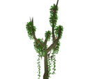 Climbing Jungle Tree (Whalebite)