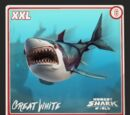 Great White Shark (World)