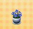 Violette (fleur)