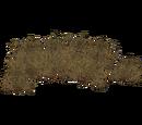 Deep Sea Brown Algae (Fauna)