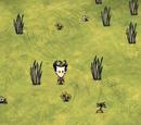 Đất Bãi Cỏ