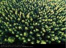 Wald von oben.png