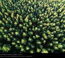Es gibt keinen Wald auf der Erde