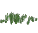 Horsetails (Whalebite)