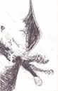 Windwalker von Hicks jung Buch.png