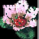 Fleur de nénuphar.png