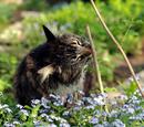 PondClan//Medicine Cat Page