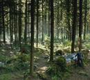 Forêt de Storybrooke