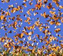 Миграция Бабочек