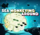 Sea Monkeying Around