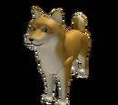 Attack Doge