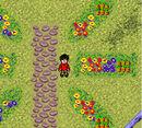 Carottes dans le jardin des Weasley.jpg
