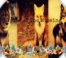Tribe of The Missing