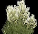 Pampas Grass (Aurora Designs)