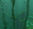 Kelp Forest Caves