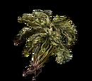 Flor verde (Dark Souls III)